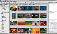 Widok miniatur w FotoAlbum. Za pomocą panelu z prawej strony oraz przycisków u góry ekranu dodasz oceny, słowa kluczowe oraz komentarze.
